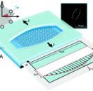 Suspended monolayer graphene under true uniaxial deformation